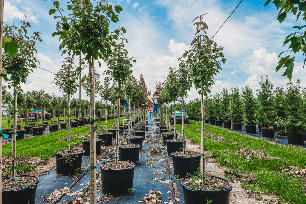 County Line Ornamental & Tree - Wholesale Nursery in Mount Dora, FL - Central Florida / Orlando area
